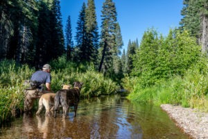 Fly fishing for McCloud River Redband Trout